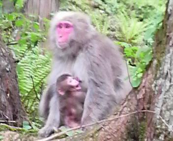 上高地猿.jpg